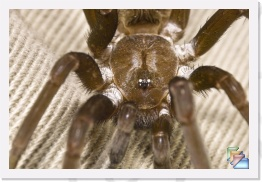 Trap Door Spider * Trap Door Spider * (15 Slides)